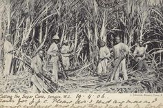 Photographic Print: Cutting the Sugar Cane, Jamaica, West Indies : 24x16in