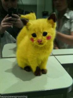 Top Performance PET DOG CAT GROOMING HAIR DYE COLORING GEL Coat Fur *14 Colors   eBay