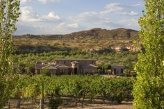 Alcantara Vineyards & Winery, surprisingly pleasant wine in Arizona!