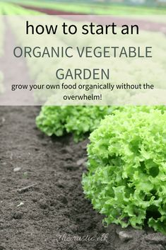 Growing your own food can be incredibly rewarding, but it can also be overwhelming to get started. If you're finding yourself confused with how to start your own organic vegetable garden, look no further. I've got tips for you to get started today! #vegetablegardening #organicgardening #gardening