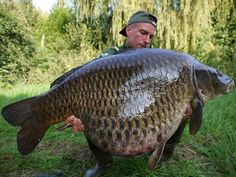 #Repost @lieutnan02 #carpfishing #carp #fishing #danglersnation