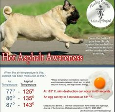 Please remember How hot asphalt is for our Pets.  @Barbi_Twins pic.twitter.com/pV6kvW7Byw