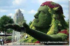 Resultado de imagen para flores plantas jardin