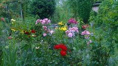 Róże i lilie