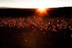Luz de otoño II by MÓNICA LÓPEZ-DÁVALOS HERNÁEZ on 500px
