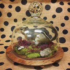 Just completed this piece today! Real taxidermy chipmunk terrarium. Doesn't get…