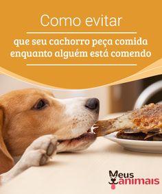 Como evitar que seu cachorro peça comida enquanto alguém está comendo  Certamente, várias vezes, quando você está #comendo, seu #animal começa toda uma #cena, #latindo e #implorando por #comida.  #ALIMENTAÇÃO