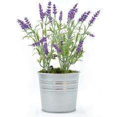 Lavender In A Zinc Pot