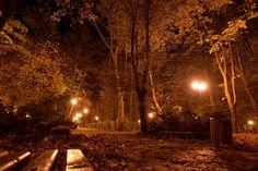 It's night and autumn Autumn, Night, Landscapes, Fall Season, Fall