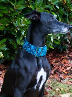 Martingale Collar Greyhound Collar whippet by CrystalWolfCollars