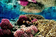 Coral Reef at Palmyra Atoll National Wildlife Refuge, by Jim Marago.Courtesy of USFWS - Pacific Region.  Scientists at Stanford University have developed a way to help remove carbon dioxide from oceans to slow their acidification -- using little spheres of air -- bubbles. #BeautifulNow #bubbles #coral #conservation #nature #photography
