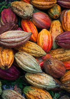 Cacao contains the mood enhancer anandamide known as the bliss molecule which creates a feeling of euphoria. Which you can find on our Fruit And Veg, Fruits And Vegetables, Pitaya, Chocolat Valrhona, Cacao Recipes, Food Texture, Cacao Chocolate, Cacao Beans, Theobroma Cacao