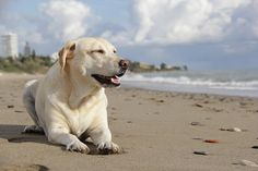 The 9 Most Dog-Frien