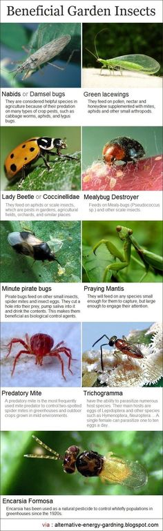 before you get rid of any insects, check first if it is a good garden bug. If they are, then just let them be so they can keep doing wonders for your organic garden. Discover the 9 most beneficial garden insects at http://homeandgardenamerica.com/9-most-beneficial-garden-insects.