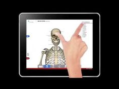 Now you can have the entire human body in the palm of your hand with the Anatomy Study Guide app by America's Navy. Navigate over 10 high-res 3-D diagrams of the human body, take notes and share with others, and even quiz yourself on what you've learned – all for free. Download it today!   #navy #usnavy #americasnavy navy.com