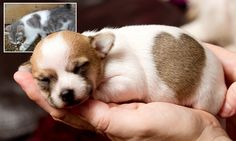 Heartwarming, the pets labelled with love: Puppy and kitten born with heart markings in their fur.