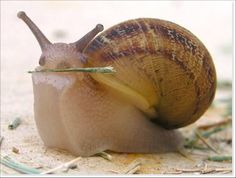 even snails can be cute.