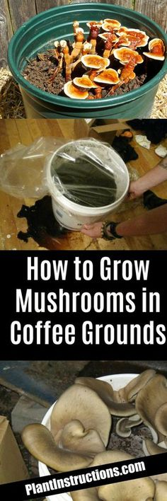 Container Gardening How to Grow Mushrooms - Growing mushrooms in regular garden soil is not possible, and so we'll show you how to grow mushrooms in coffee grounds. Growing Mushrooms At Home, Garden Mushrooms, Growing Vegetables, Fruits And Vegetables, Veggies, Garden Soil, Vegetable Garden, Garden Art, Container Gardening