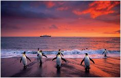 Falkland Islands. Specifically please take me so I can experience this sunset with these penguins.