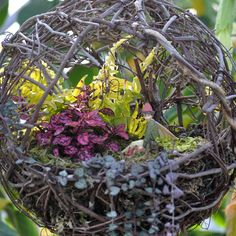 Garden in a sphere-  Love this!  Might have to try with fake plants to hang by my front door (I don't plan on being home to keep it watered)