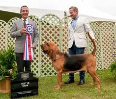 Ever wonder what it takes to be a Westminster Kennel Club Dog Show competitor? Canine hopefuls have to enjoy traveling, be in top shape and win shows!