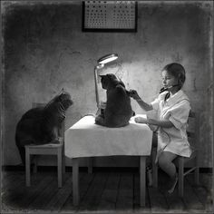 Photo by Andy Prokh   Cat's Doctor