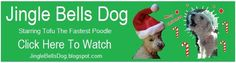 Dog and Poodle Care Information. Dog itch and fleas. Dog itching problem solutions. THE MIRACLE CURE FOR DOG ITCH, home remedies for dog itching and more... Poodle Haircuts and Grooming. Amazing pictures and videos of The Fastest Poodle (tm). .. with information about TOFU THE FASTEST POODLE.