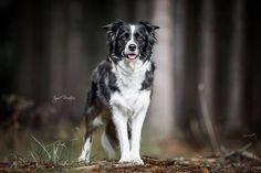 Dog Selfie, Husky, Dogs, Photography, Animals, Instagram, Classy, Youtube, Dog
