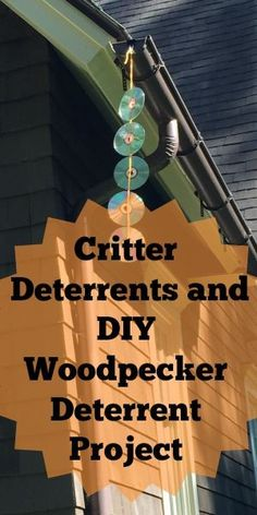 Natural Ways To Get Rid Of Critters And DIY Woodpecker Deterrent Project