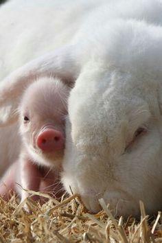 Rabbit and little piggy Konijn met jong biggetje