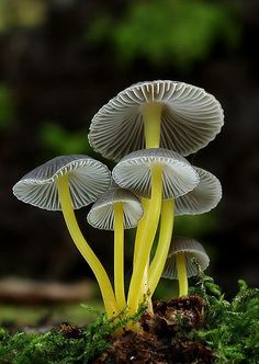 Wild Mushrooms -- Mushrooms, lichen and fungi