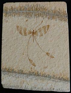 Jurassic Solnhofen Limestone insect - Germany