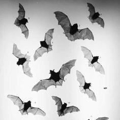 Love Bats!