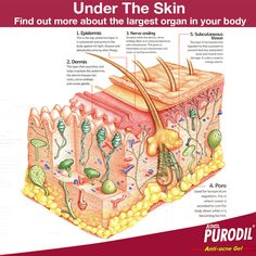 Find out more about the largest organ in your body.   #SkinCare #SkinHealth #SkinCareRemedies #CureSkinDisease #SkinTreatment #AyurvedicTreatmentForSkinDisease