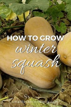 Winter squashes like butternut or pumpkin have long storage periods under the right conditions, making them an essential crop for anyone trying to grow a lot of their own food.