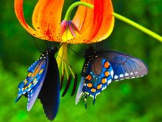 Butterfly Absorb the Honey from Flower | Most Beautiful Images