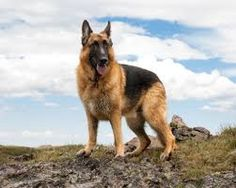 Resultado de imagem para cachorros