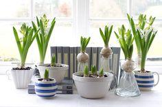 bulbs indoors