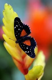 . Mariposa Butterfly, Butterfly Kisses, Butterfly Wings, Butterflies Flying, Beautiful Butterflies, How Beautiful, Beautiful World, Moth Caterpillar, Bugs And Insects
