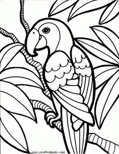 Rainforest Animals Coloring Pages Printable Jungle Animal Jungle Coloring Page