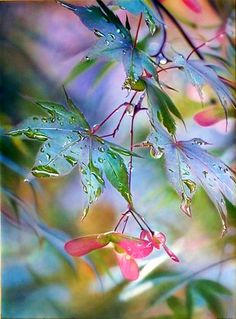 ~~Summer Rain ~ sunlit leaves after a summer shower by Ross Barbera~~