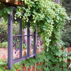 Northwest Flower and Garden show – Creative Gardener Garden Crafts, Garden Art, Garden Ideas, Hops Trellis, Garden Junk, Trellis Design, Garden Show, Home Brewing, Gardening Tips