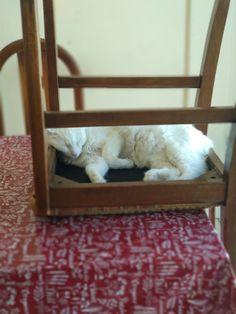 feriado estilo gato
