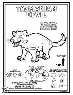 A Tasmanian Devil Coloring Page