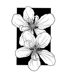 Ink Pen Drawings, Cool Art Drawings, Tattoo Drawings, Black And White Art Drawing, Botanical Tattoo, Floral Drawing, Tattoo Project, Bullet Journal Art, Flower Doodles