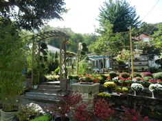 Kara, Istanbul, Plants, House, Image, Design, Home, Plant