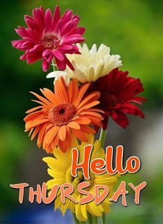 Good Morning Friends Images, Good Morning Wishes Quotes, Good Morning Greetings, Hello Thursday, Happy Thursday, Thursday Images, Days Of Week, Good Day, Good Morning Images