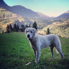 Dog in landscape