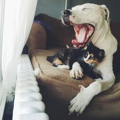 Sweet three-legged rescue Bella loves her new babies.