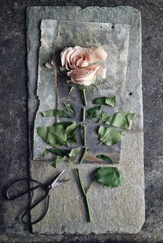 I think this photo is the most interesting one so far of Order And/Or Disorder because it shows in one photo without dividing it in part. The flower it self is putted in the order but the cutter part of it shows disorder.